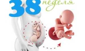 Плод на 38 неделе беременности: нормы и особенности
