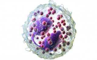 Сколько хромосом содержит ядро сперматозоида и какие особенности есть у хромосомного набора спермиев?
